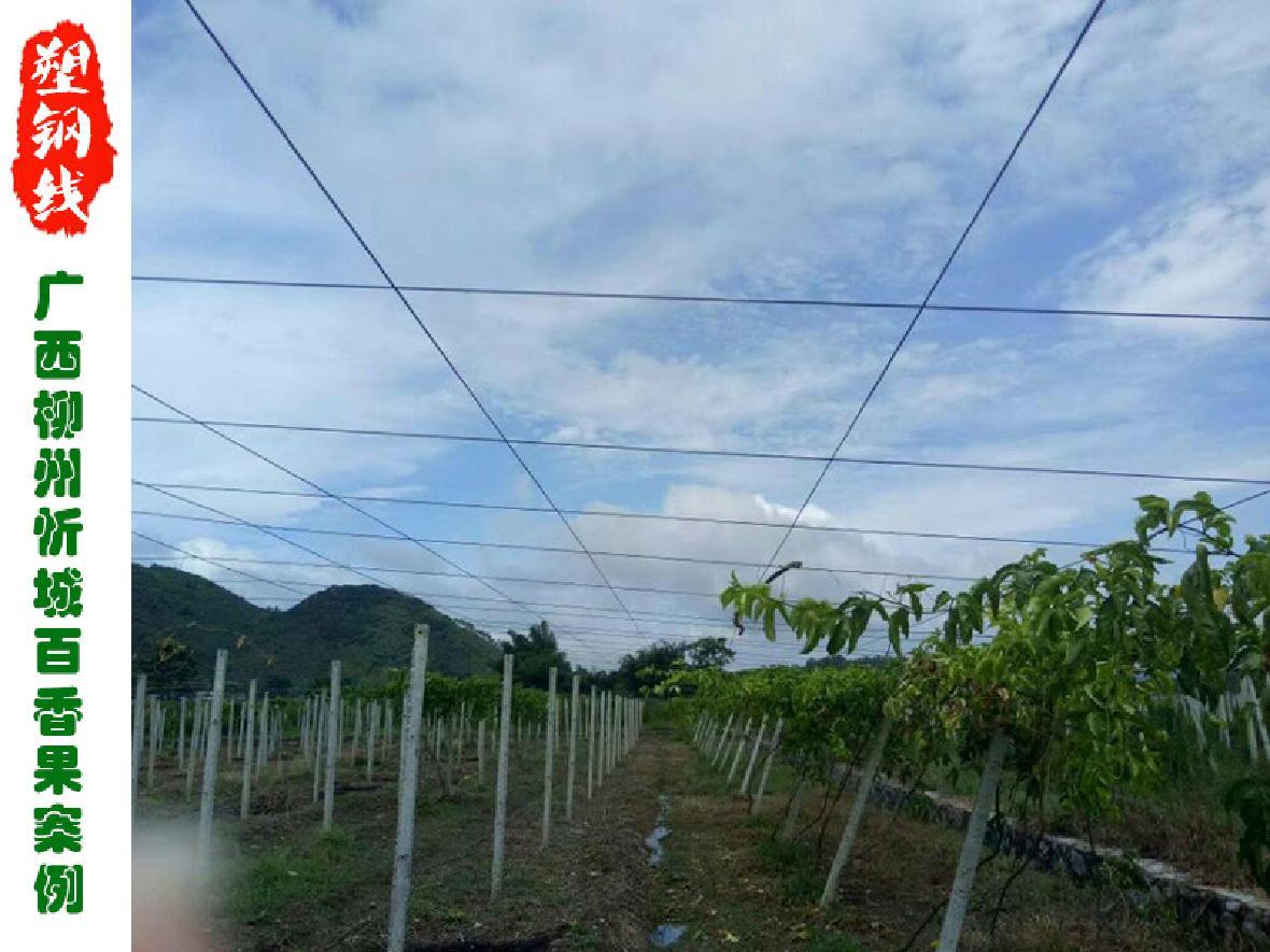 广西省柳州市忻城十万亩百香果园