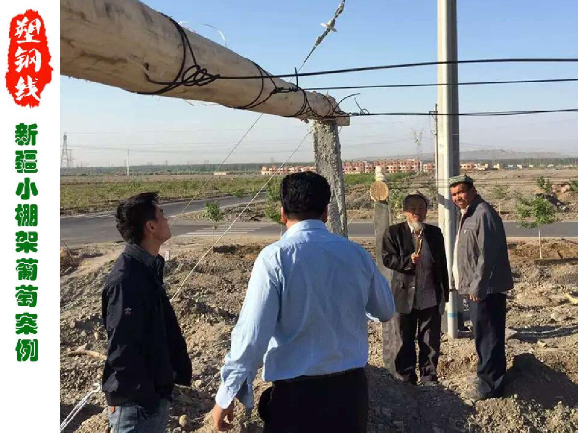 新疆吐鲁番地区小棚架葡萄园改造工程