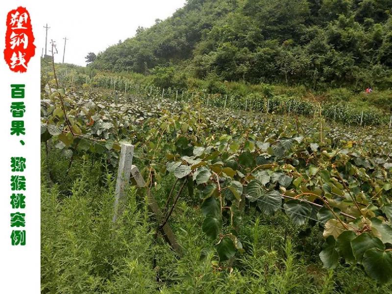 百香果、猕猴桃及香菇产业的指定厂家