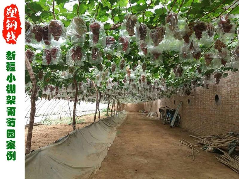 新疆吐鲁番葡萄园安装事例图